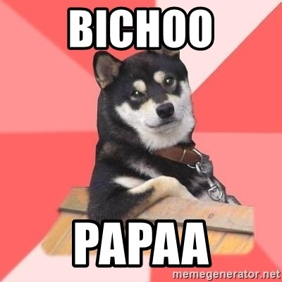 Cool Dog - BICHOO PAPAA