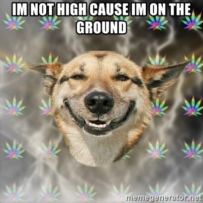 Stoner Dog - im not high cause im on the ground