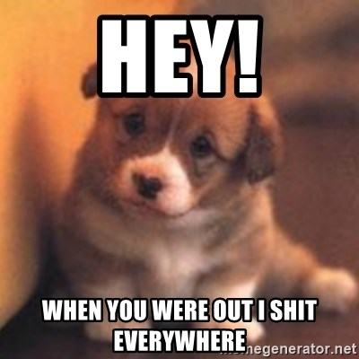cute puppy - Hey! When you were out I shit everywhere