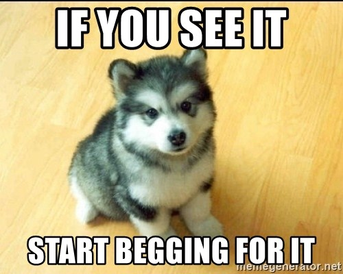 Baby Courage Wolf - IF you SEE IT Start begging for it