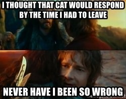 Never Have I Been So Wrong - I thought that cat would respond by the time I had to leave never have i been so wrong