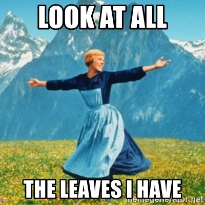 Sound Of Music Lady - look at all the leaves i have