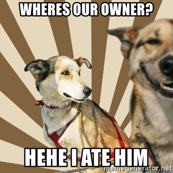 Stoner dogs concerned friend - WHERES OUR OWNER? HEHE I ATE HIM