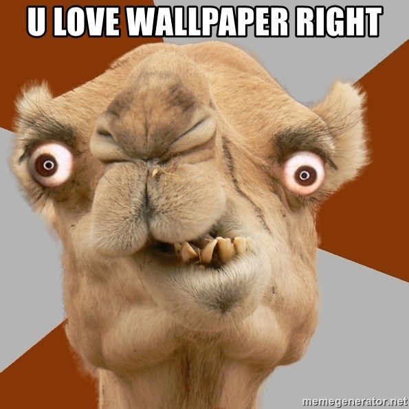 Crazy Camel lol - U LOVE WALLPAPER RIGHT