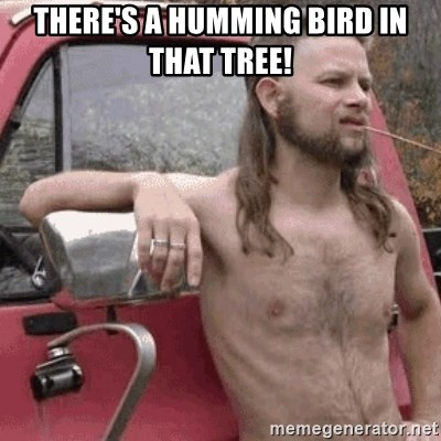 Almost Politically Correct Redneck - There's a humming bird in that tree!