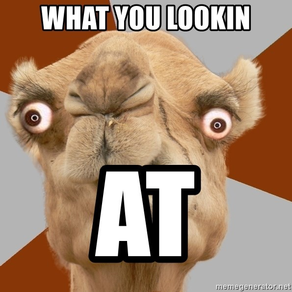 Crazy Camel lol - WHAT YOU LOOKIN AT
