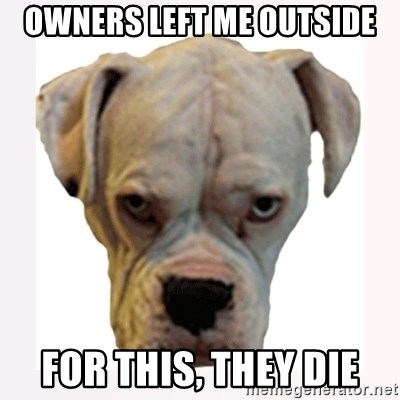 stahp guise - OWNERS LEFT ME OUTSIDE FOR THIS, THEY DIE