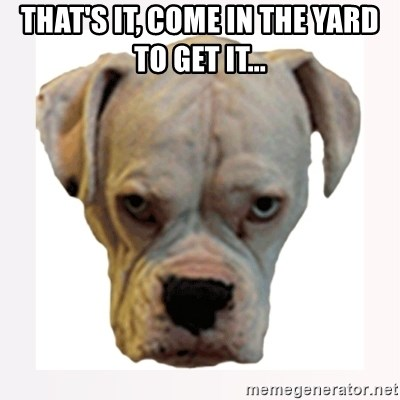 stahp guise - that's it, come in the yard to get it...