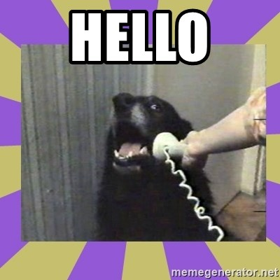 Yes, this is dog! - HELLO