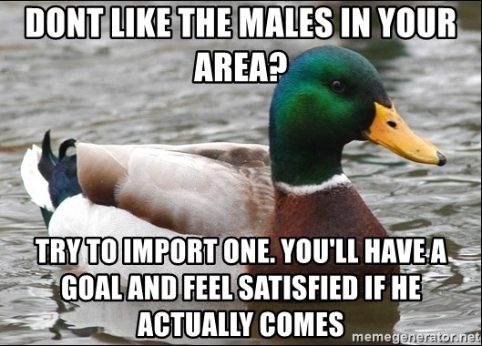 Actual Advice Mallard 1 - dont like the males in your area? try to import one. you'll have a goal and feel satisfied if he actually comes