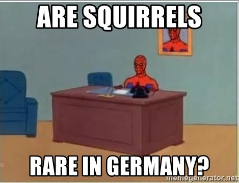 Spiderman Desk - are squirrels rare in germany?
