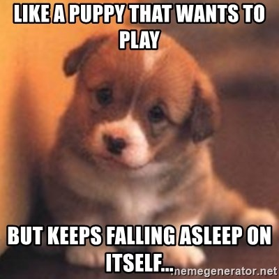 cute puppy - Like a puppy that wants to play but keeps falling asleep on itself...