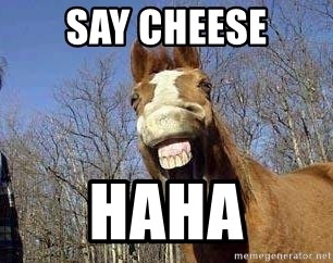 Horse - SAY CHEESE HAHA