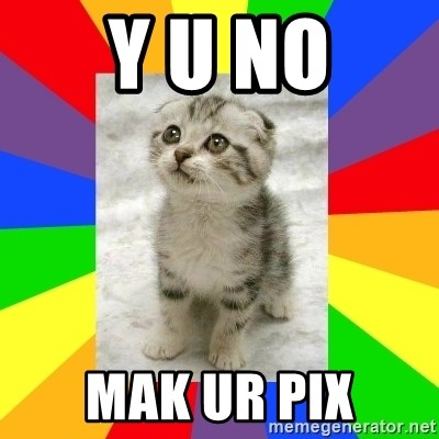 Cute Kitten - Y U NO MAK UR PIX