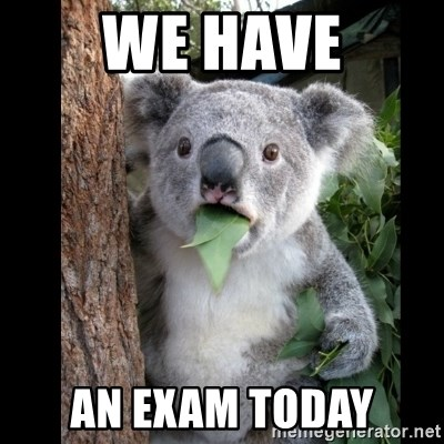 Koala can't believe it - We have an exam today