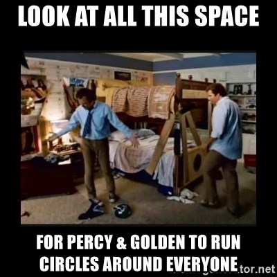 stepbrothers - look at all this space for percy & golden to run   circles around everyone