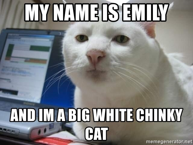 Serious Cat - My name is emily and im a big white chinky cat