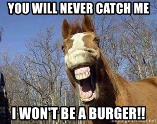 Horse - YOU WILL NEVER CATCH ME I WON'T BE A BURGER!!