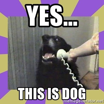 Yes, this is dog! - YES... THIS IS DOG