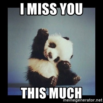 I Miss You This Much Cute Baby Panda Meme Generator