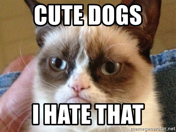 Angry Cat Meme - cute dogs  i hate that