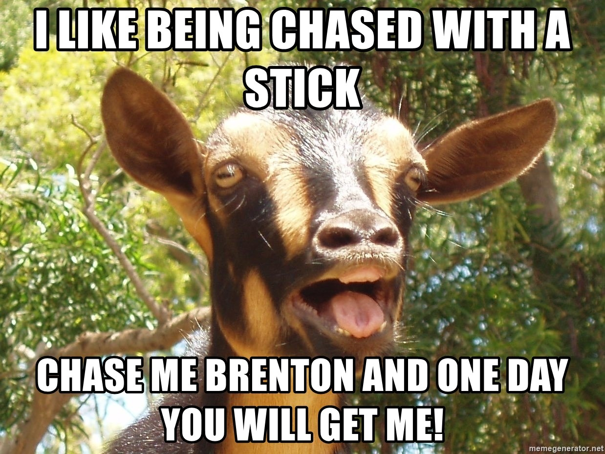 Illogical Goat - I like being chased with a stick Chase me Brenton and one day you will get me!