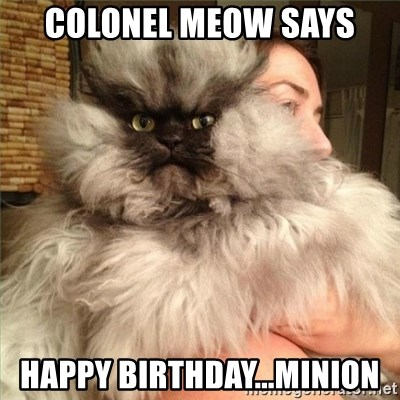 Colonel Meow - colonel meow says Happy birthday...minion