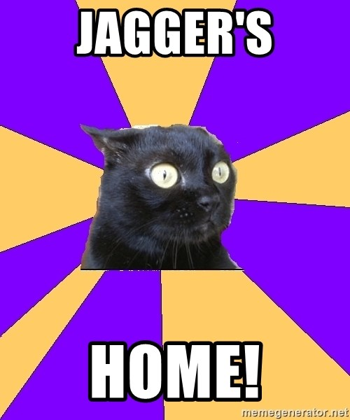 Anxiety Cat - jagger's home!