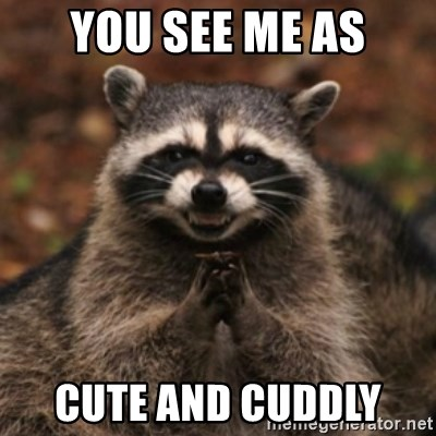 evil raccoon - YOU SEE ME AS CUTE AND CUDDLY