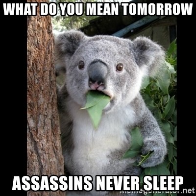 Koala can't believe it - what do you mean tomorrow  assassins never sleep