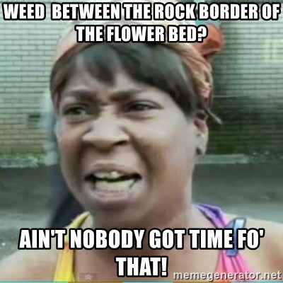 Sweet Brown Meme - weed  between the rock border of the flower bed? ain't nobody got time fo' that!
