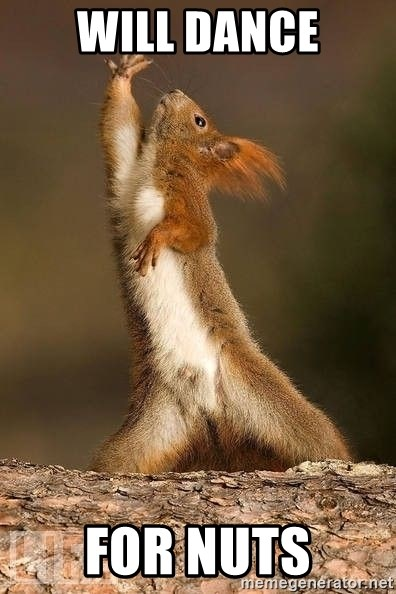 dramatic squirrel - Will Dance For Nuts