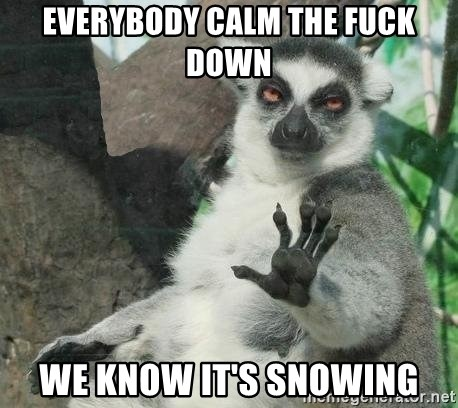 36579519 everybody calm the fuck down we know it's snowing not today lemur