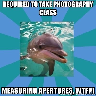 Dyscalculic Dolphin - required to take photography class measuring apertures, wtf?!