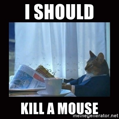 i should buy a boat cat - I should  kill a mouse
