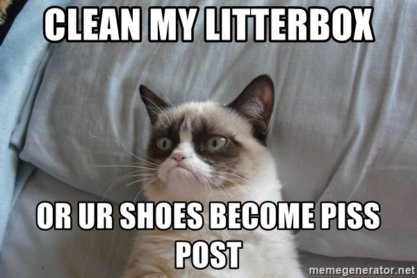 Grumpy cat good - Clean my litterbox or ur shoes become piss post