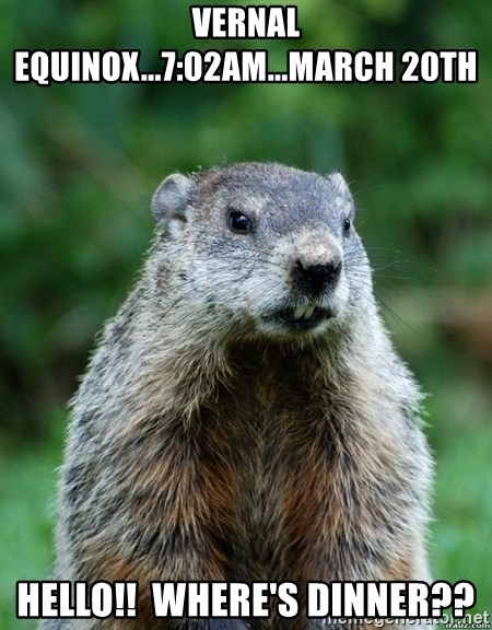 grumpy groundhog - Vernal equinox...7:02am...March 20th Hello!!  where's dinner??