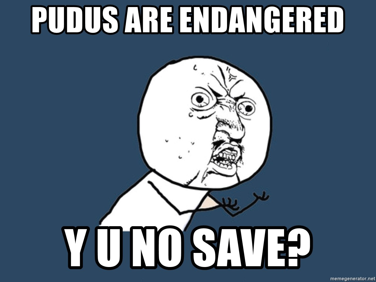Y U No - pudus are endangered y u no save?