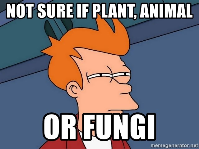 Futurama Fry - NOT SURE IF PLANT, ANIMAL OR FUNGI