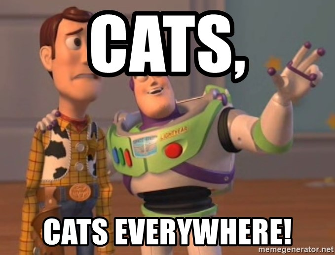Tseverywhere - Cats, cats everywhere!