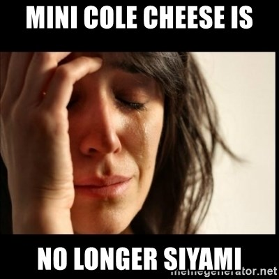 First World Problems - MINI cole cheese is no longer siyami