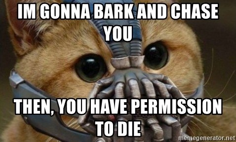 bane cat - IM GONNA BARK AND CHASE YOU THEN, YOU HAVE PERMISSION TO DIE