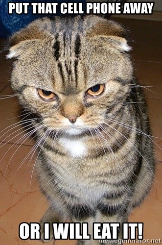 angry cat 2 - Put that cell phone away Or i will eat it!