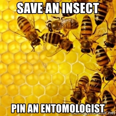 Honeybees - save an insect pin an entomologist