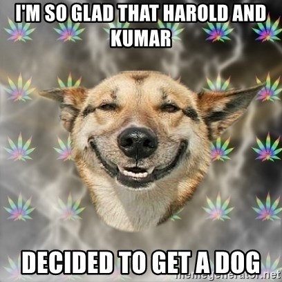 Stoner Dog - I'M SO GLAD THAT HAROLD AND KUMAR  DECIDED TO GET A DOG