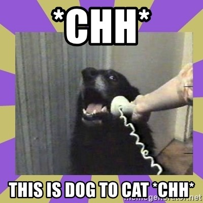 Yes, this is dog! - *chh* this is dog to cat *CHH*