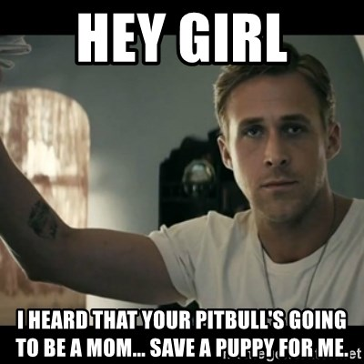 ryan gosling hey girl - Hey Girl  I heard that your pitbull's going to be a mom... Save a puppy for me.