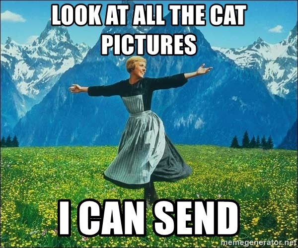 Look at all the things - Look at all the cat pictures I can send