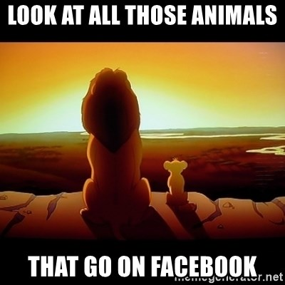 Simba - look at all those animals that go on facebook