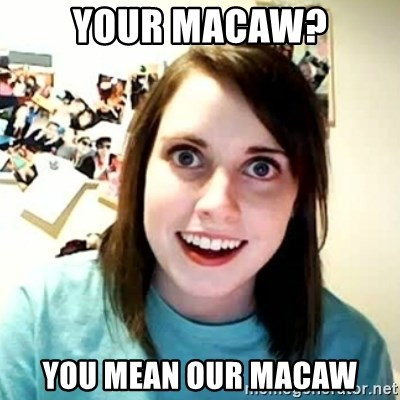 overly attached girl - YOUR MACAW? YOU MEAN OUR MACAW